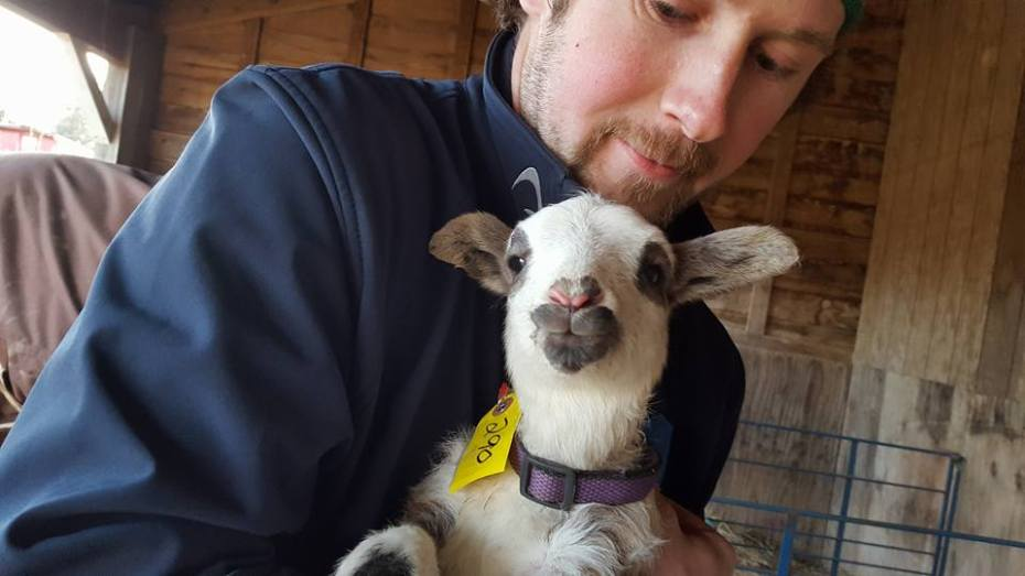 sheep-farmer