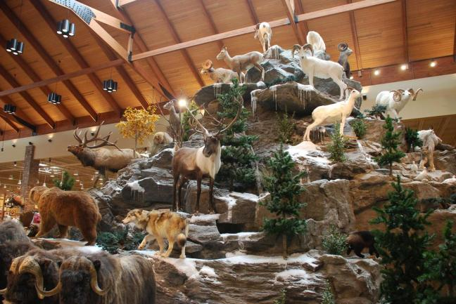 Cabela's Display