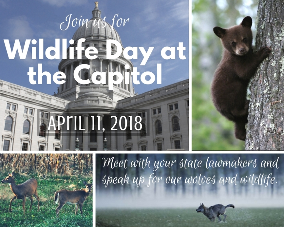SAVE THE DATE_ Wolf Day