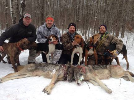 Wisconsin is the only state to permit wolf hounding.