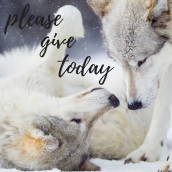 Please Give Today