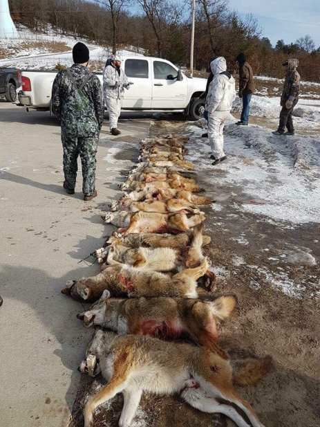 Coyote Killing Contest
