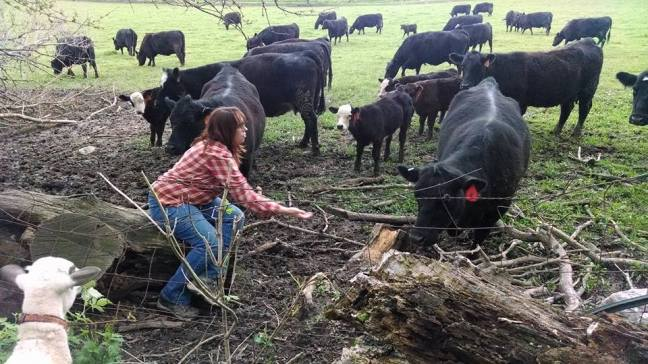 Melissa with Cattle
